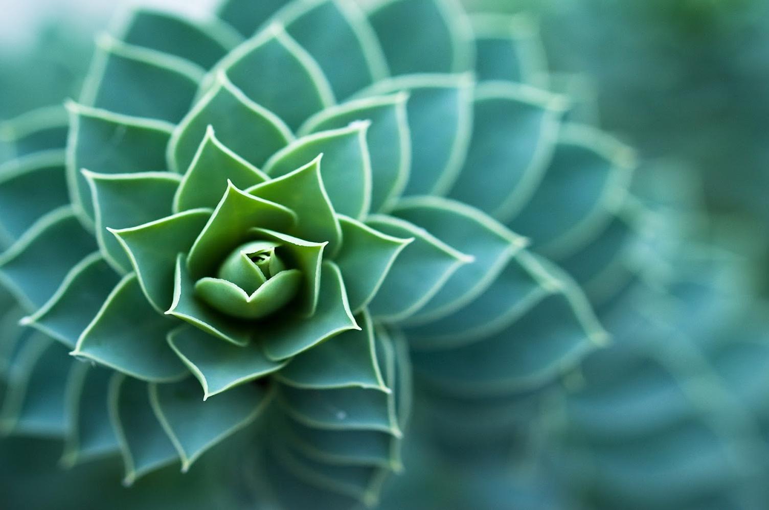 Nature's Marvels: Innovation in Natural Building Design