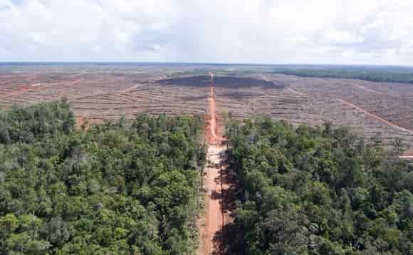 Palm oil related deforestation