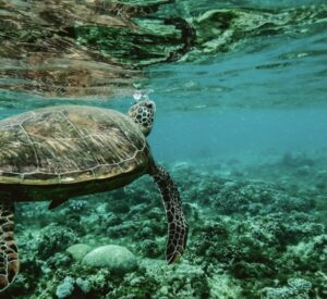 Turtle in an Ocean