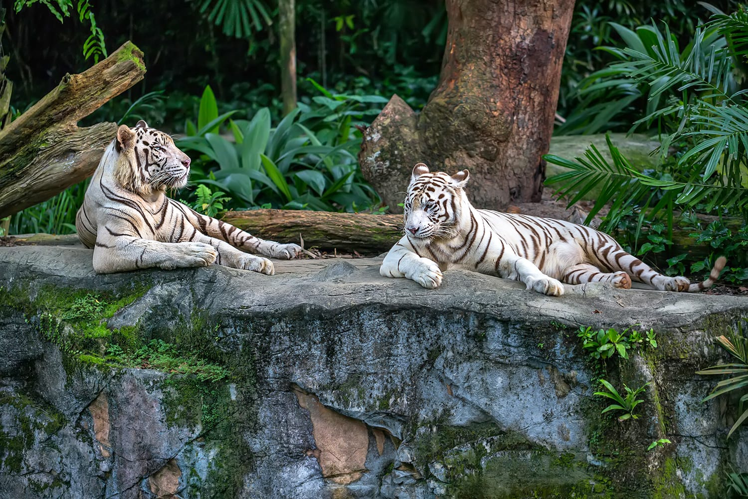 Zoos A Hidden Opportunity For Sustainable Architecture & Education