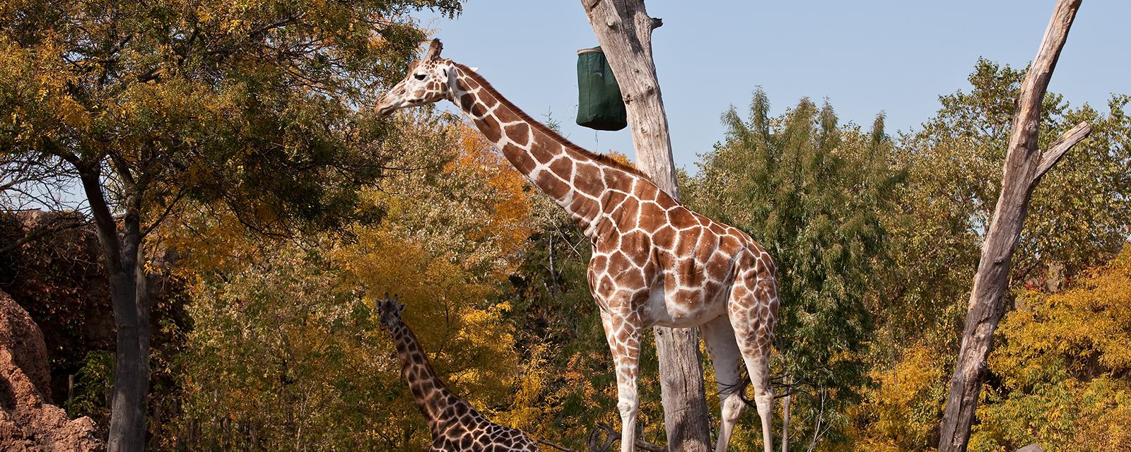 Zootopia – The World of Sustainable Zoos
