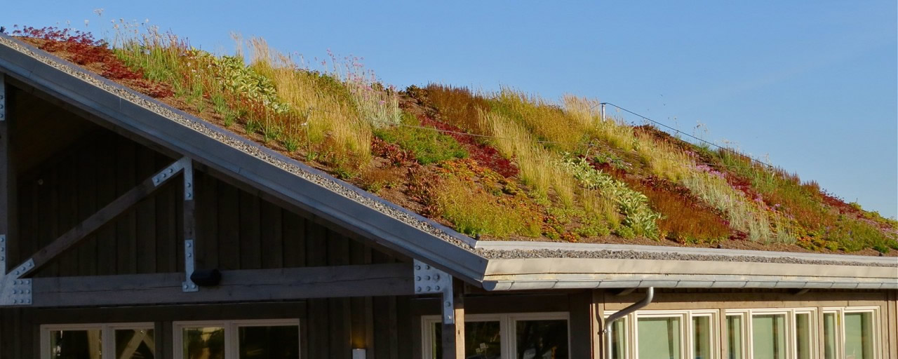 Green Roofs: Everything You Need to Know So They Won't Go Over Your Head